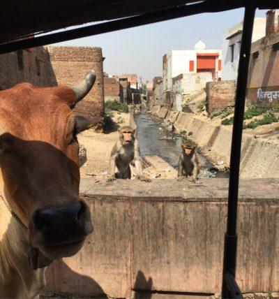 Tuk Tuk Ride in Agra, India